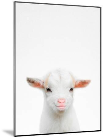 Baby Goat-Tai Prints-Mounted Photographic Print