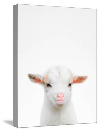 Baby Goat-Tai Prints-Stretched Canvas Print