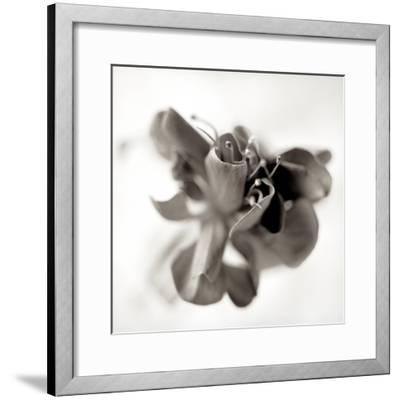 Florison #37-Alan Blaustein-Framed Photographic Print