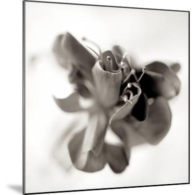 Florison #37-Alan Blaustein-Mounted Photographic Print