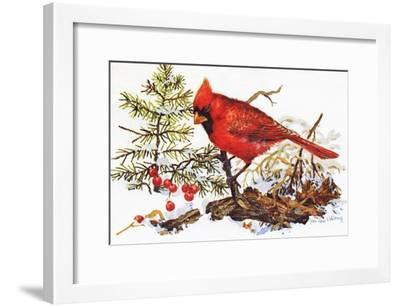 Holiday Christmas Cardinal, Beatrice Litzinger Collection--Framed Art Print