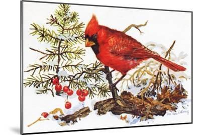 Holiday Christmas Cardinal, Beatrice Litzinger Collection--Mounted Art Print
