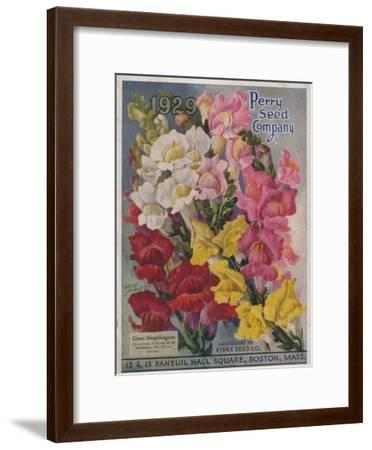 Giant Snapdragons from the Perry Seed Company--Framed Art Print