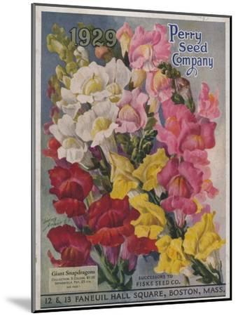 Giant Snapdragons from the Perry Seed Company--Mounted Art Print