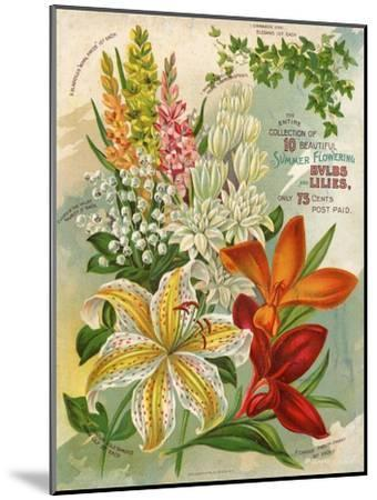 Collection of 10 Beautiful Summer Flowering Bulbs and Lillies--Mounted Art Print