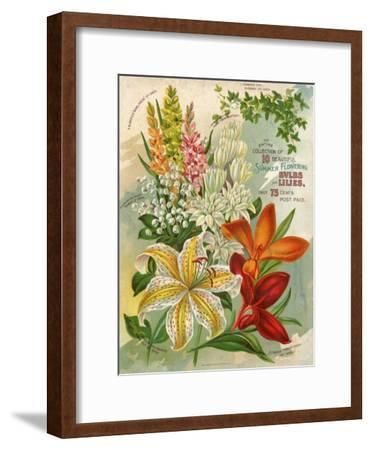 Collection of 10 Beautiful Summer Flowering Bulbs and Lillies--Framed Art Print