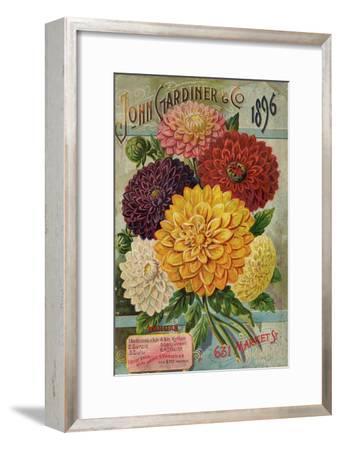 John Gardiner and Co. 1896: Dahlias--Framed Art Print