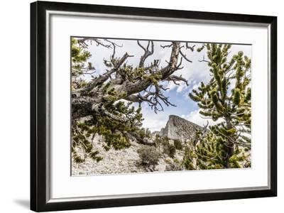 The House Range As Seen Through Bristlecone Pines-Ron Koeberer-Framed Photographic Print