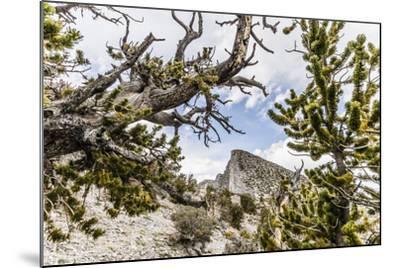 The House Range As Seen Through Bristlecone Pines-Ron Koeberer-Mounted Photographic Print