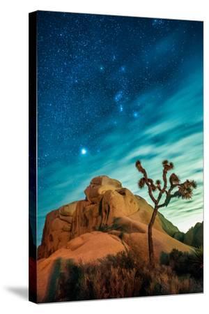 Watching The Stars Dance In Joshua Tree National Park-Daniel Kuras-Stretched Canvas Print