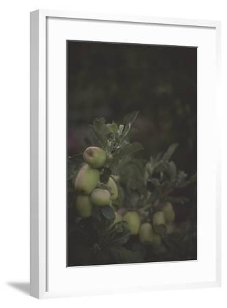 Fall Bloom And Harvest In An Organic Garden In Ventura, California-Rebecca Gaal-Framed Photographic Print