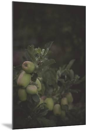 Fall Bloom And Harvest In An Organic Garden In Ventura, California-Rebecca Gaal-Mounted Photographic Print