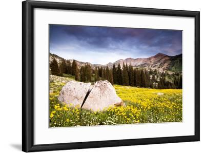 Wildflowers In Albion Basin Little Cottonwood Canyon, Utah-Lindsay Daniels-Framed Photographic Print