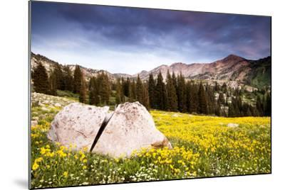 Wildflowers In Albion Basin Little Cottonwood Canyon, Utah-Lindsay Daniels-Mounted Photographic Print