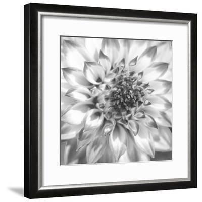 Black & White Dalia 4-Suzanne Foschino-Framed Photo