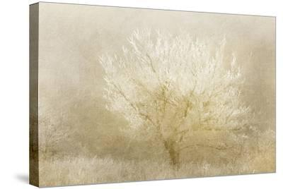 Dreaming Tree-Kimberly Allen-Stretched Canvas Print