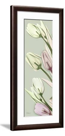Spring Time Tulips-Albert Koetsier-Framed Photo
