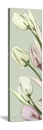 Spring Time Tulips-Albert Koetsier-Stretched Canvas Print