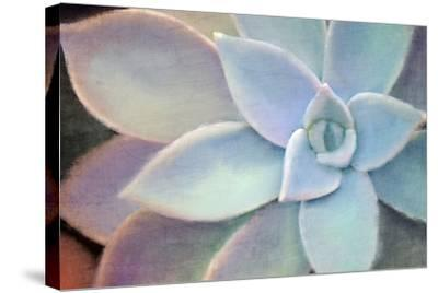 Softly-Kimberly Allen-Stretched Canvas Print