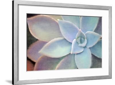Softly-Kimberly Allen-Framed Photo