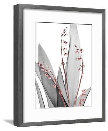 Lily of the Blush 1-Albert Koetsier-Framed Photo