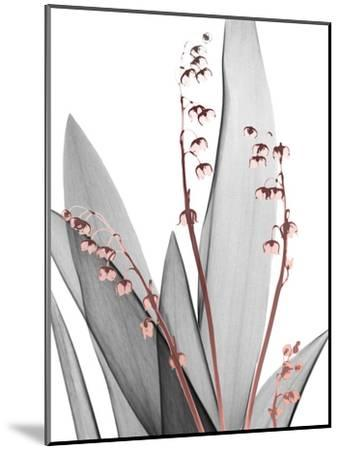 Lily of the Blush 1-Albert Koetsier-Mounted Photo