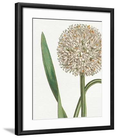 Botanique Blue II on White No Words-Wild Apple Portfolio-Framed Art Print