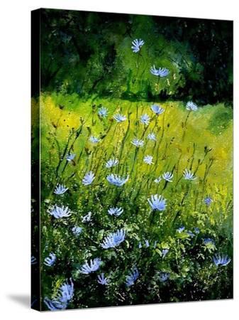 Chicorees flowers-Pol Ledent-Stretched Canvas Print