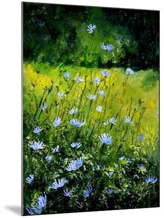 Chicorees flowers-Pol Ledent-Mounted Art Print
