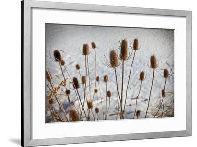 Prairie Seedheads-Steve Gadomski-Framed Photographic Print