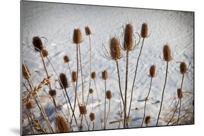 Prairie Seedheads-Steve Gadomski-Mounted Photographic Print