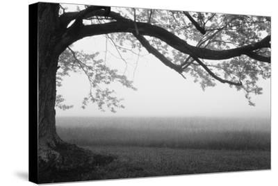 Tree in a farm, Knox Farm State Park, East Aurora, New York State, USA--Stretched Canvas Print