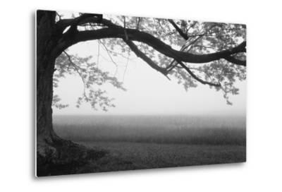 Tree in a farm, Knox Farm State Park, East Aurora, New York State, USA--Metal Print
