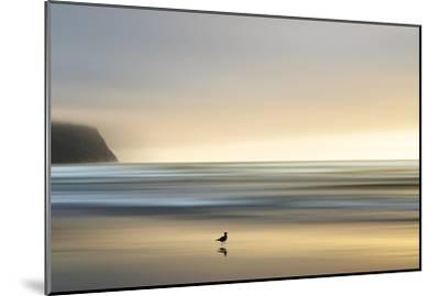 Morning Visit-Marvin Pelkey-Mounted Premium Photographic Print
