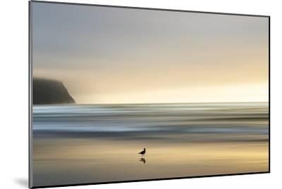 Morning Visit-Marvin Pelkey-Mounted Photographic Print