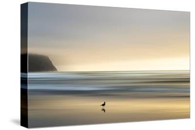 Morning Visit-Marvin Pelkey-Stretched Canvas Print