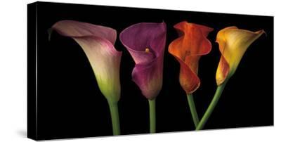 Jewel Calla Lilies-Assaf Frank-Stretched Canvas Print