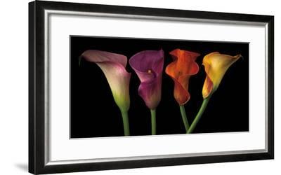Jewel Calla Lilies-Assaf Frank-Framed Photographic Print