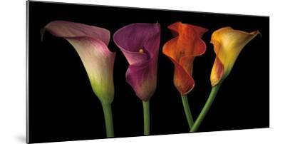Jewel Calla Lilies-Assaf Frank-Mounted Photographic Print
