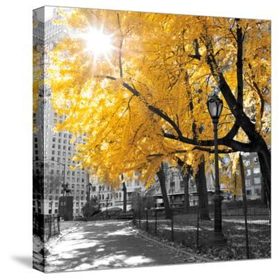 Park Pretty II-Assaf Frank-Stretched Canvas Print