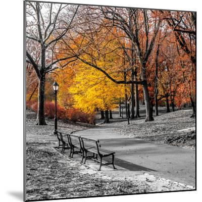 Park Pretty I-Assaf Frank-Mounted Photographic Print