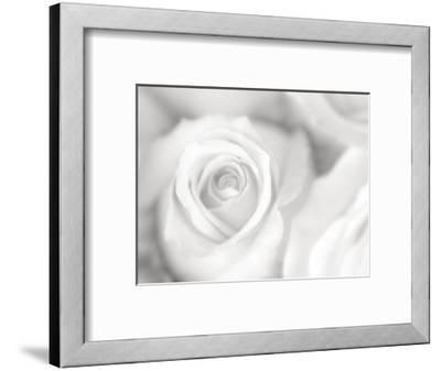Rose Studies II-James McLoughlin-Framed Photographic Print