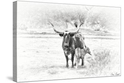 Longhorn & Baby-David Drost-Stretched Canvas Print