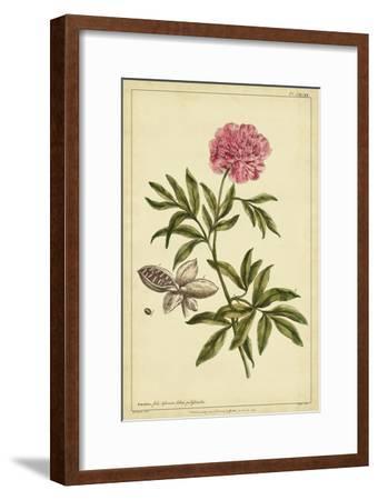 Peony, Pl. CXCIX-Phillip Miller-Framed Art Print