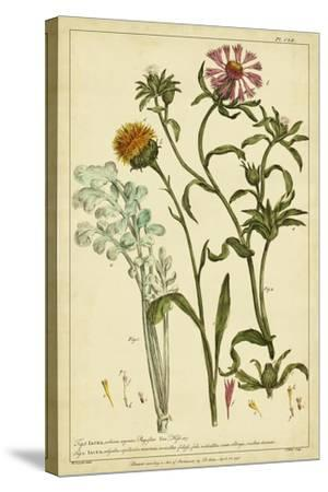 Iacea, Pl. CLll-Phillip Miller-Stretched Canvas Print