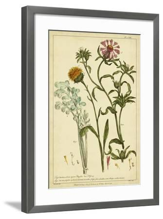 Iacea, Pl. CLll-Phillip Miller-Framed Art Print