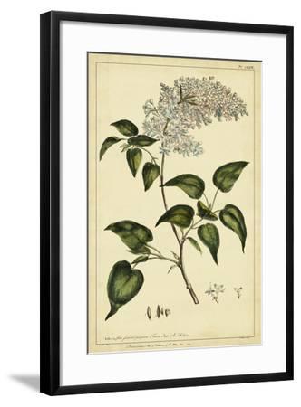 Lilac, Pl. CLXIII-Phillip Miller-Framed Art Print