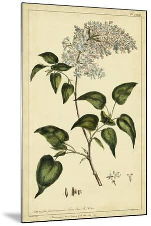 Lilac, Pl. CLXIII-Phillip Miller-Mounted Art Print