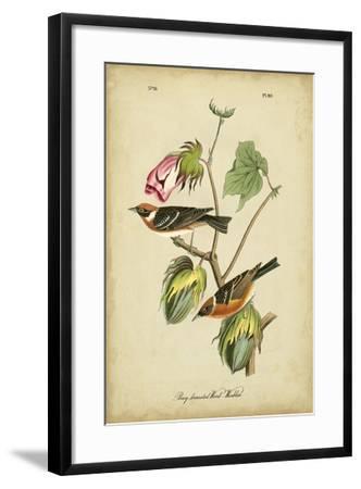 Audubon Bay Breasted Warbler-John James Audubon-Framed Art Print