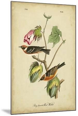 Audubon Bay Breasted Warbler-John James Audubon-Mounted Art Print